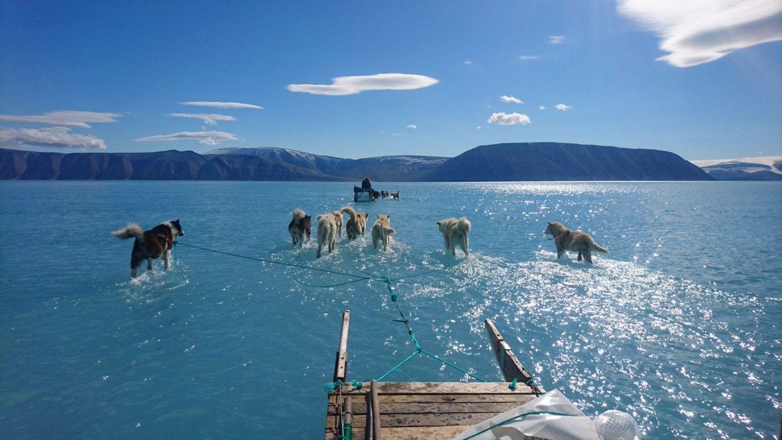 Huskies on water